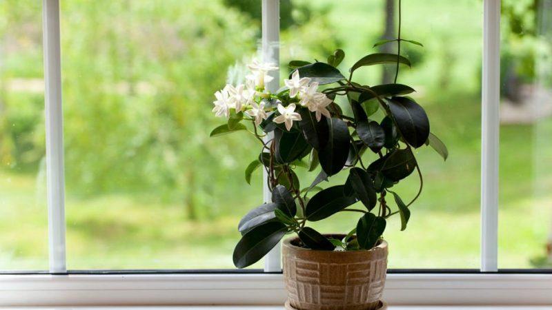 Evinizi Güzelleştirecek Ev Bitkileri